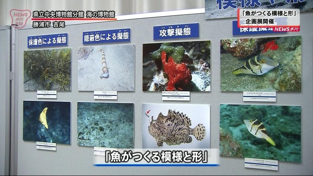 「魚がつくる模様と形」企画展開催