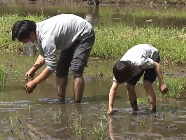 里山の再生へ NPO法人が千葉市の谷津田で田植え体験会