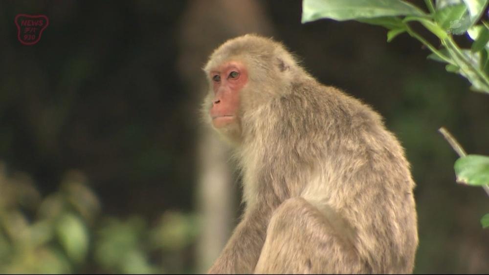動物園のサル70匹次々と脱走…おりの金網を切断した少年を逮捕