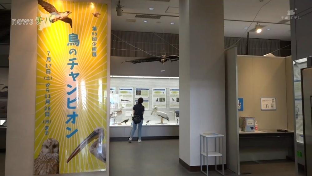 鳥の能力を紹介 企画展「鳥のチャンピオン」/千葉県我孫子市